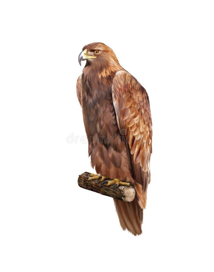 Gouden adelaar, Aquila-chrysaetos, skalni van Orel stock illustratie