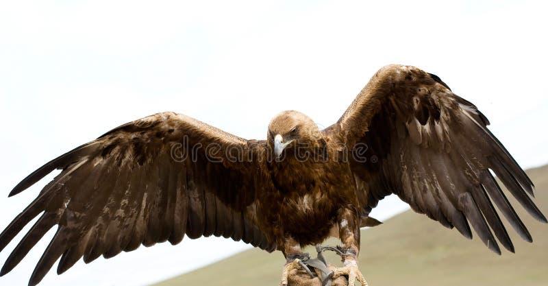 Gouden Adelaar met zijn uitgespreide vleugels royalty-vrije stock foto