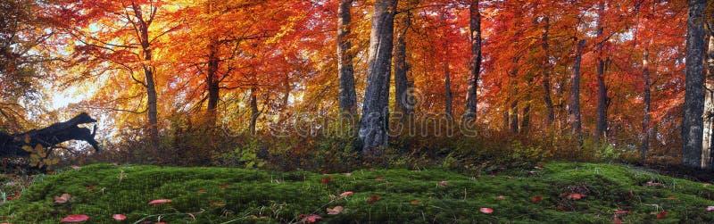 Gouden alpiene bossen stock fotografie