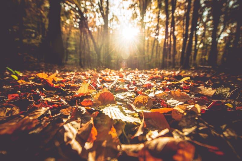 Gouden Autumn Foliage royalty-vrije stock foto