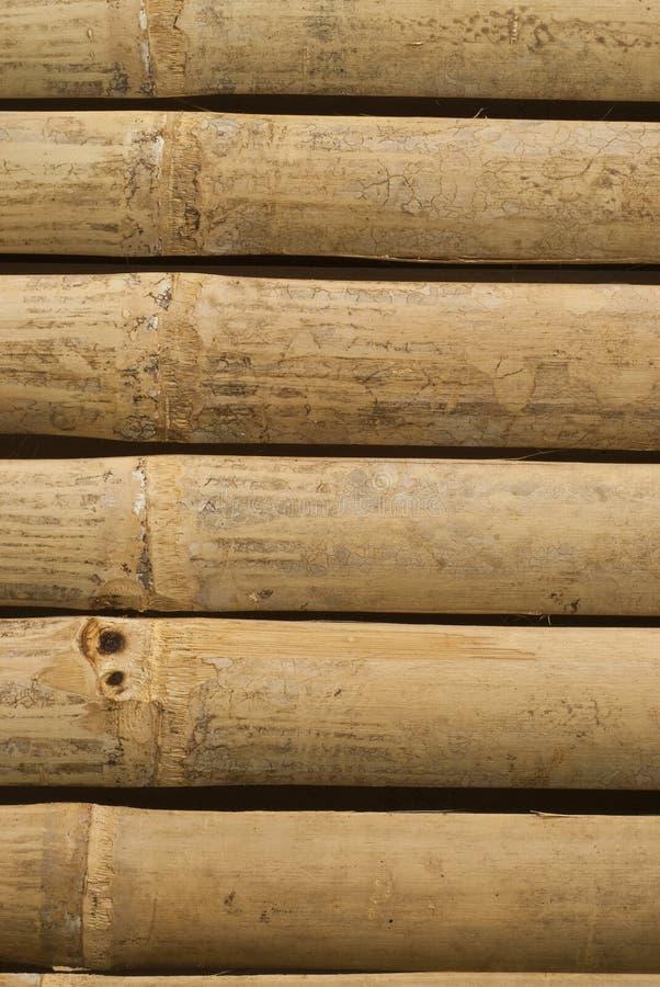 Gouden bamboe in Thailand royalty-vrije stock afbeelding