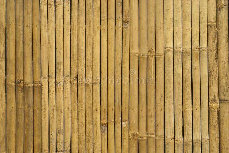 Gouden bamboe in Thailand stock foto