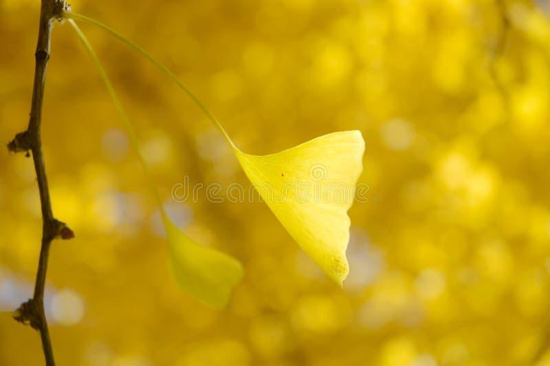 Gouden blad die in de wind blazen stock afbeelding