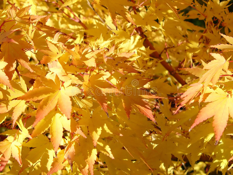 Download Gouden bladeren stock foto. Afbeelding bestaande uit november - 280994