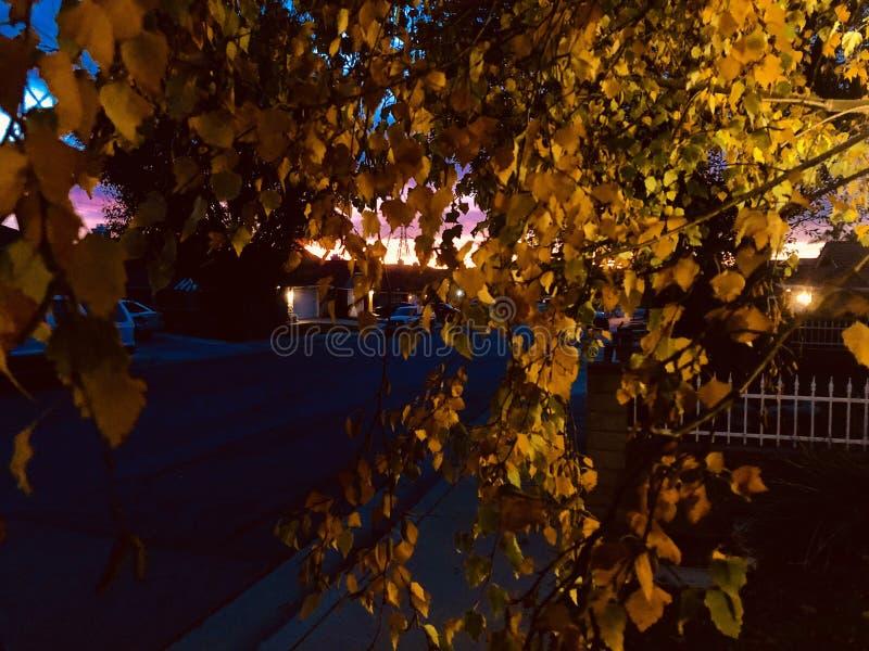 Gouden bladeren van de vogelboom en schitterende zonsondergang royalty-vrije stock foto