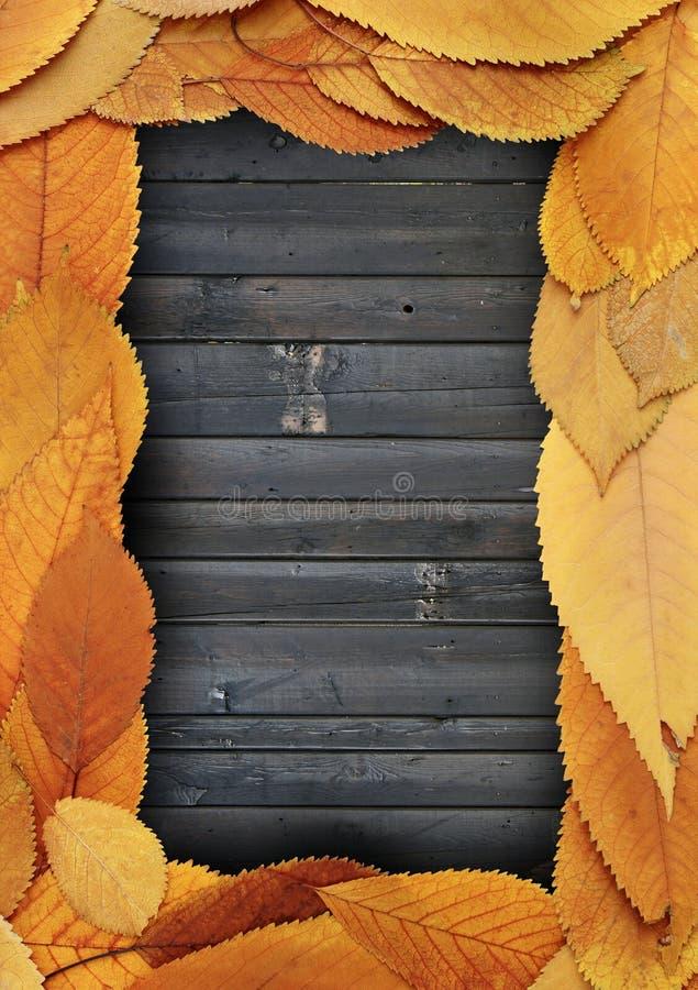 Gouden bladerenkader op gebrande planken royalty-vrije stock fotografie