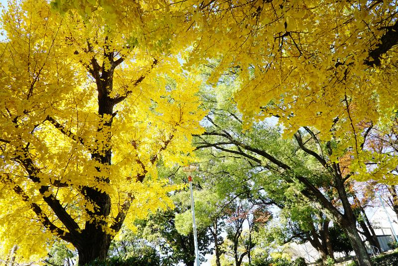Gouden bomen royalty-vrije stock foto's