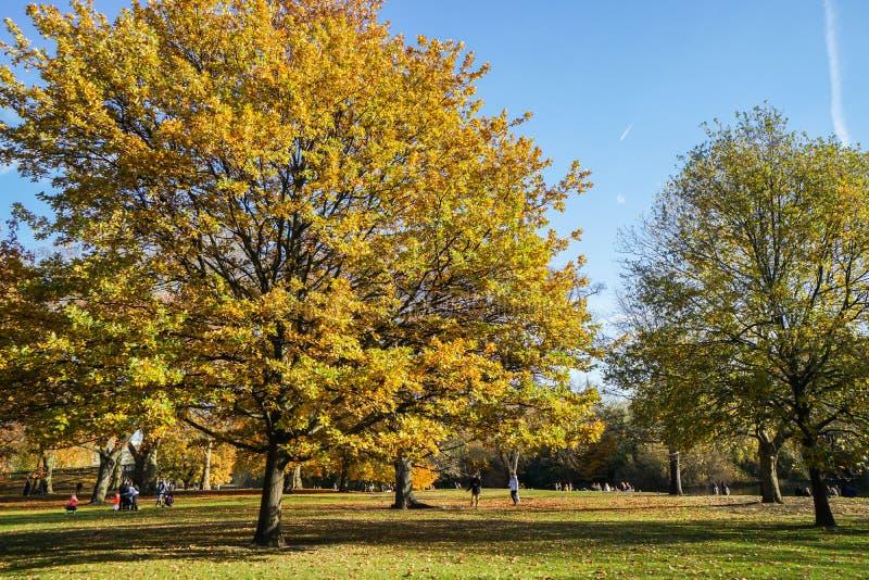 Gouden bomen in het park van Londen in de herfstseizoen stock foto's
