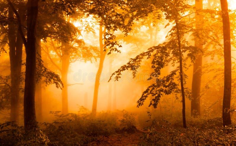 Gouden bos royalty-vrije stock foto