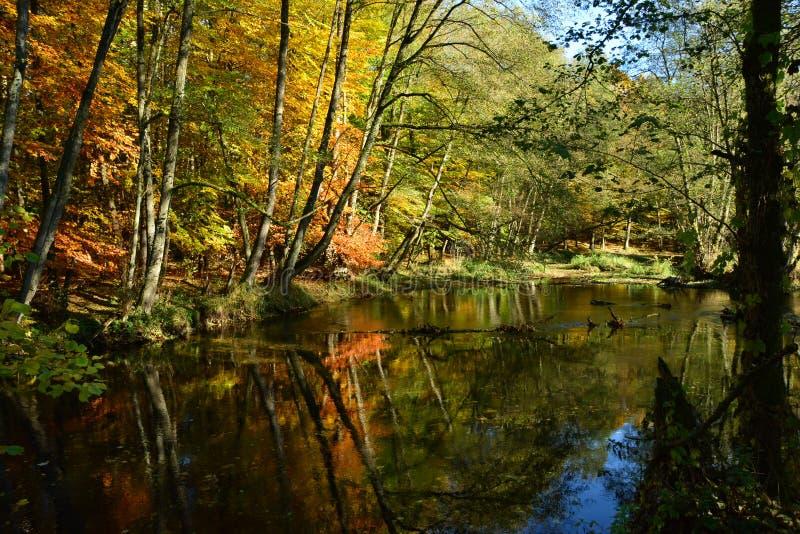 Gouden bos en gouden rivier stock afbeeldingen