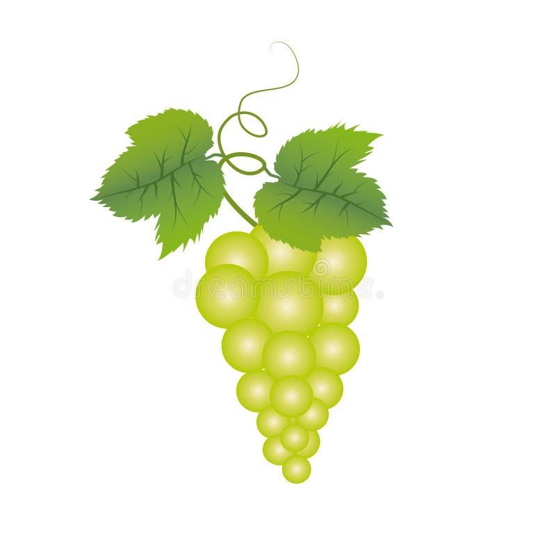 Druiven en bladeren royalty-vrije illustratie