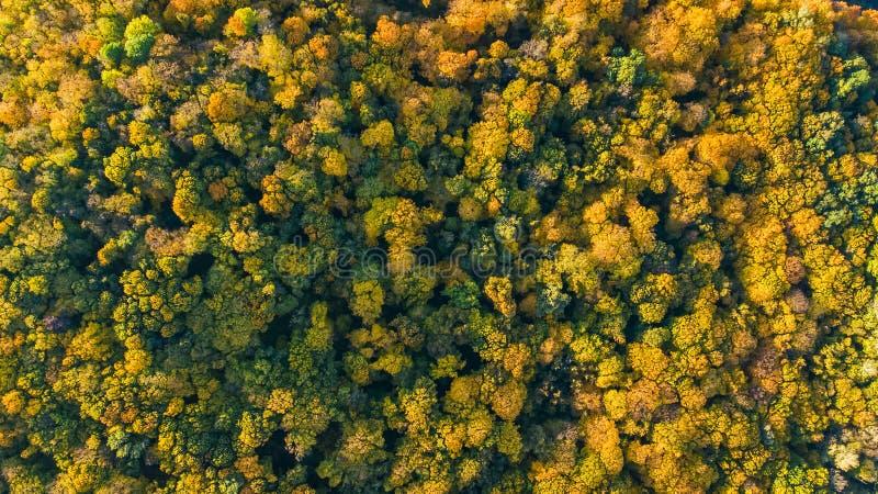 Gouden de herfstachtergrond, luchthommelmening van mooi boslandschap met gele hierboven bomen van royalty-vrije stock afbeeldingen