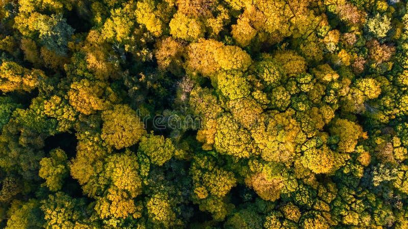 Gouden de herfstachtergrond, luchthommelmening van mooi boslandschap met gele hierboven bomen van royalty-vrije stock fotografie