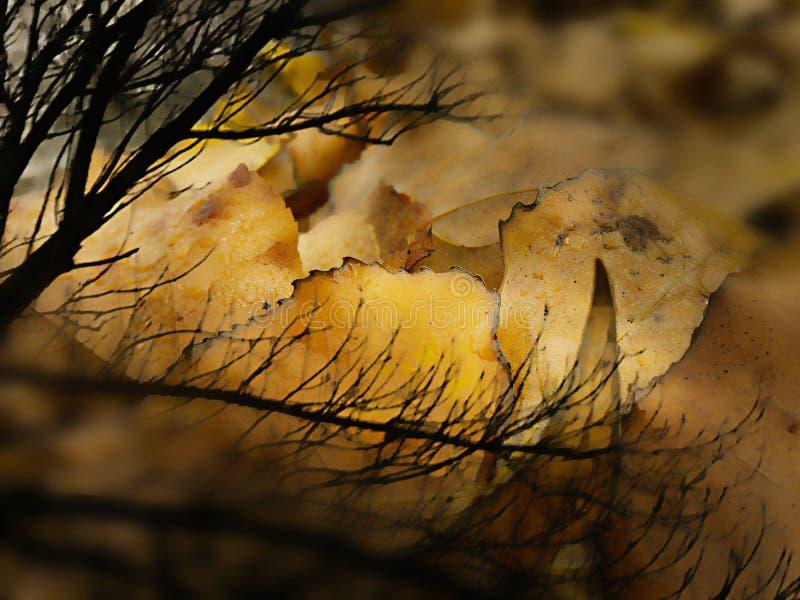 Gouden de herfstbladeren onder ontbladerde tak stock fotografie