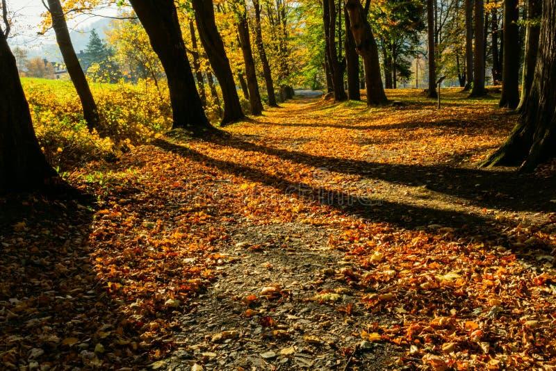 Gouden de herfstlandschap in een bos met de zon die mooie stralen van licht gieten door gebladerteunto een voetpad stock afbeelding