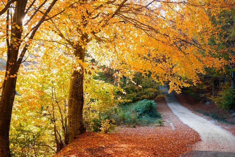Gouden de herfstweg royalty-vrije stock fotografie