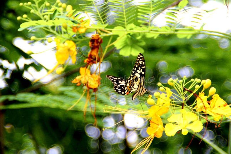 Gouden douche en buterfly stock afbeelding