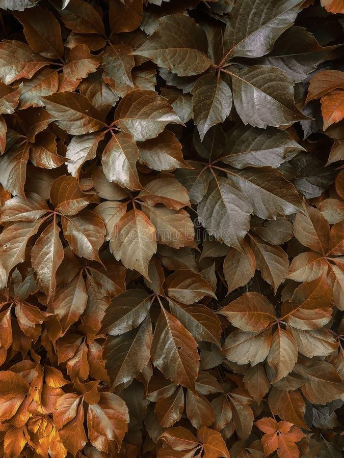 Gouden en bruine de herfstbladeren stock fotografie