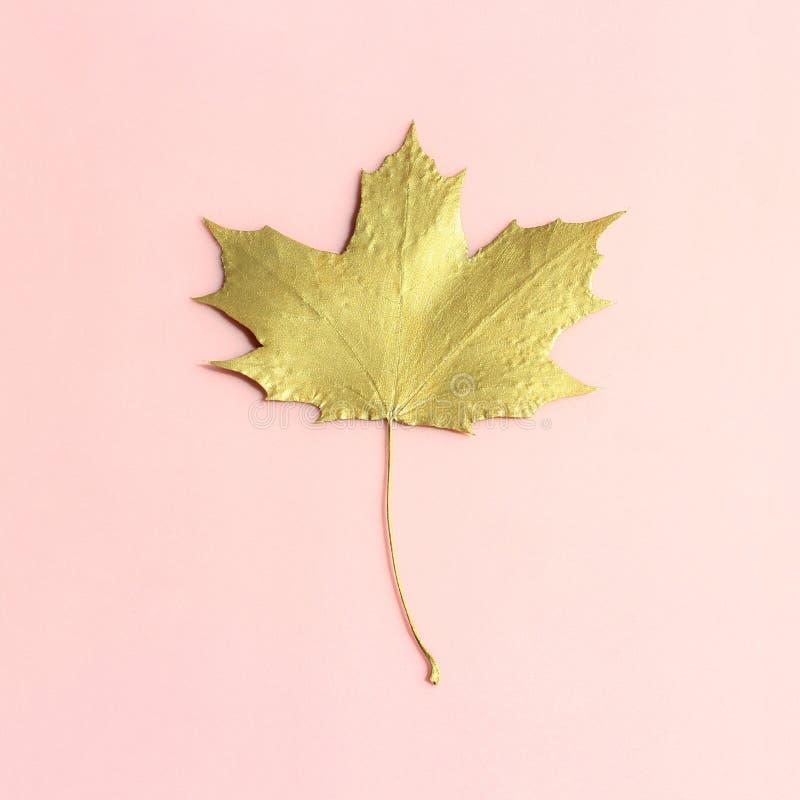 Gouden esdoornblad op pastelkleur roze achtergrond stock foto's