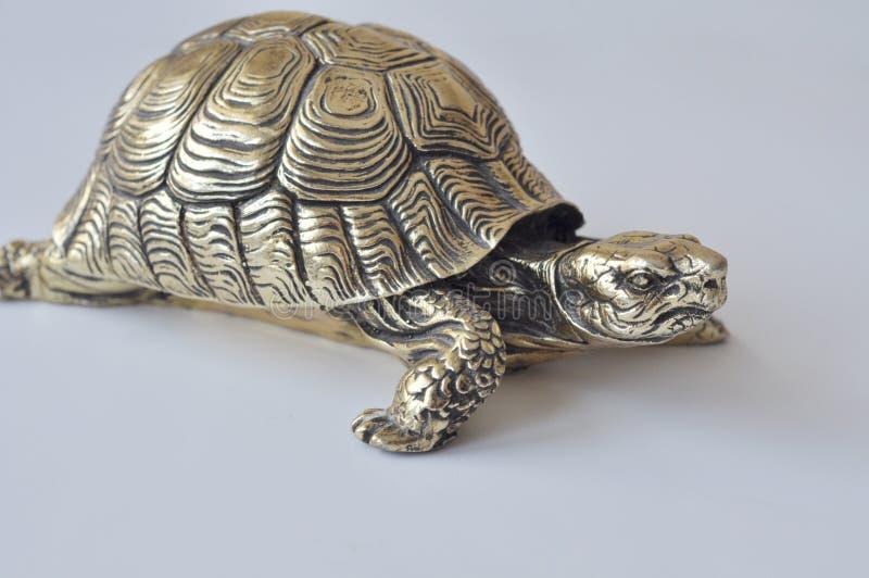 Gouden feng-shuischildpadden royalty-vrije stock foto