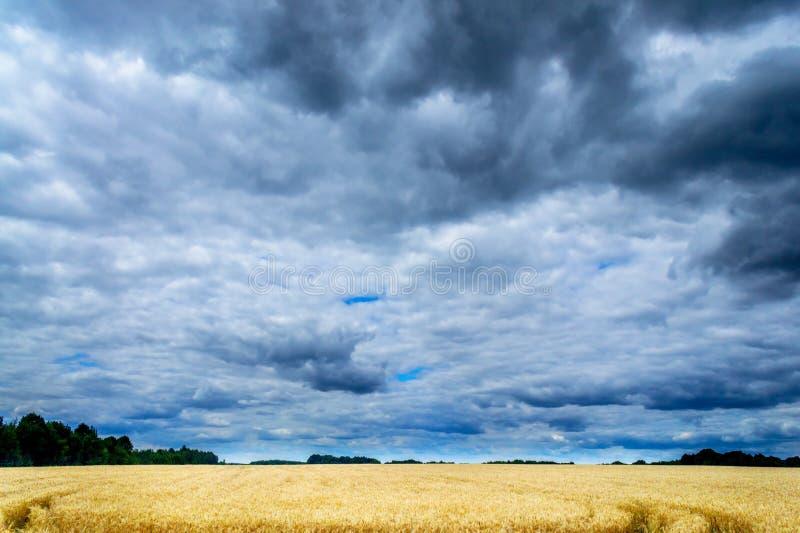 Gouden gebied van tarwe en stormachtige wolken royalty-vrije stock foto's