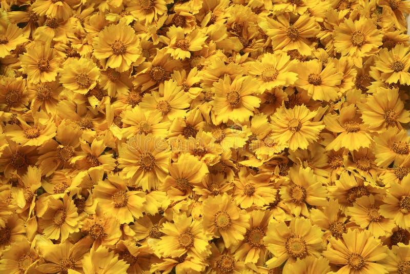 Gouden gele bloemenachtergrond royalty-vrije stock afbeeldingen