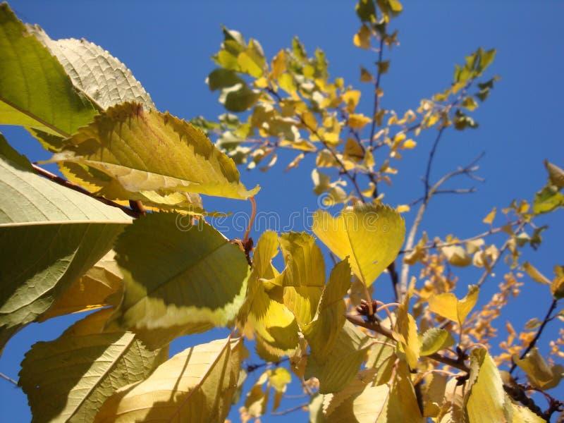 Gouden, gele en oranje bladeren onder zonnestralen van de blauwe hemel royalty-vrije stock foto