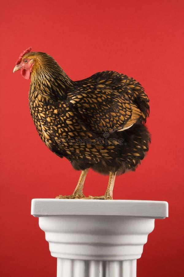 Gouden Geregen kip Wyandotte die zich op kolom bevindt. royalty-vrije stock afbeeldingen