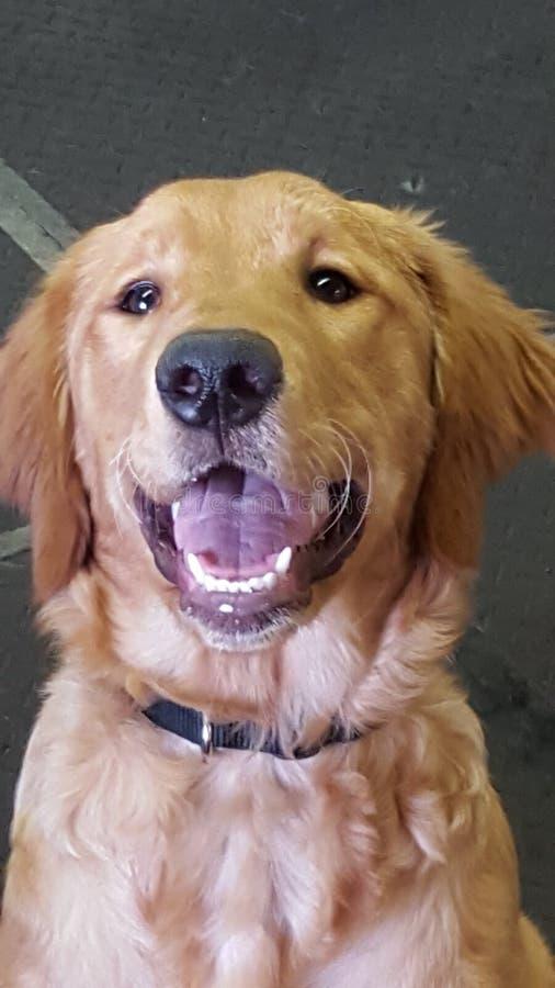 Gouden glimlach royalty-vrije stock afbeelding