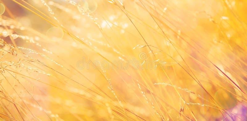 Gouden Grasachtergrond royalty-vrije stock fotografie
