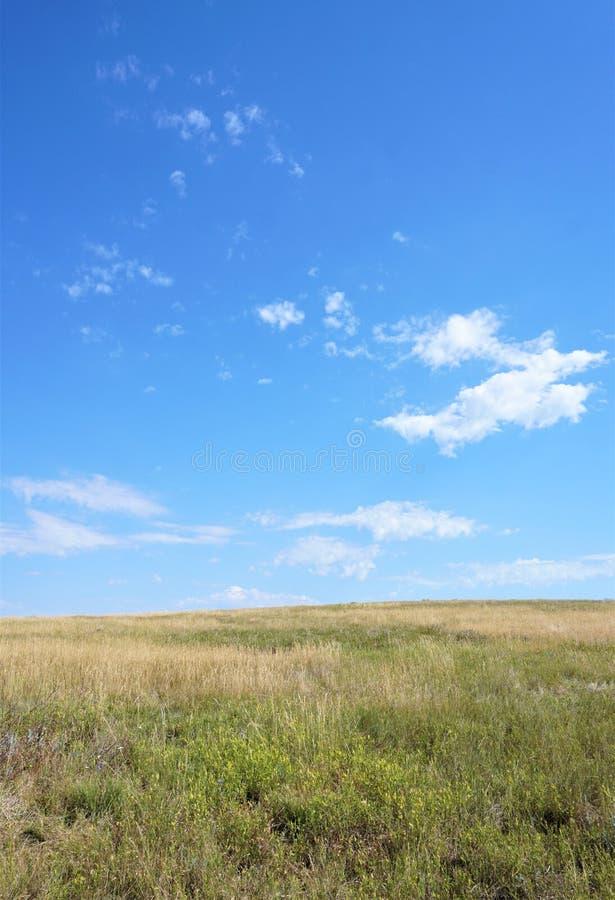 Gouden grassen van een prairie stock afbeelding