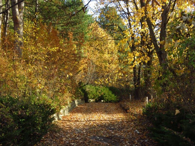 Gouden herfstval in het park Zonlicht door de bomen en heldere blauwe hemel stock afbeelding