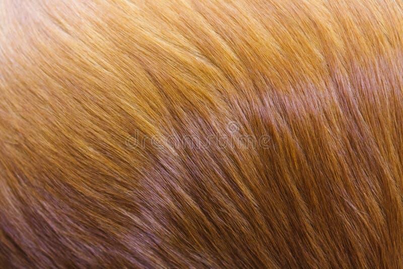 Gouden hondenbont royalty-vrije stock afbeeldingen