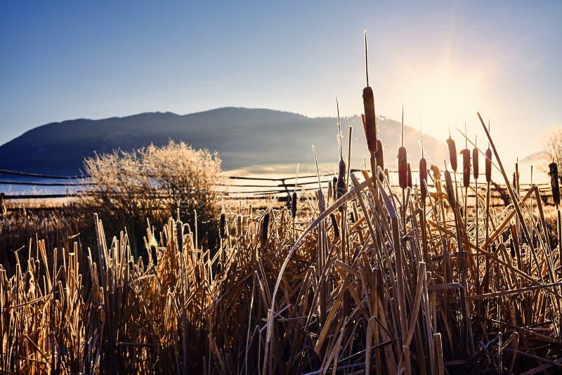 Gouden ijzige zonsopgang, Wyoming, de V.S. royalty-vrije stock foto's