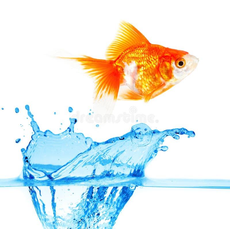 Gouden kleine vissen stock foto