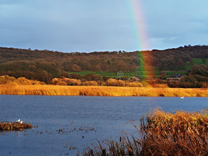 Gouden middaglicht en een regenboog in Leighton Moss, Lancashire, Engeland stock afbeelding