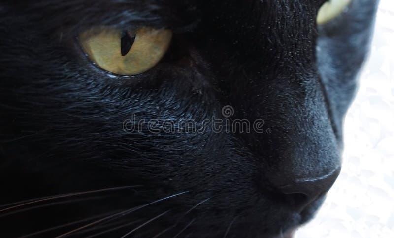 Gouden ogen en witte bakkebaarden royalty-vrije stock foto's