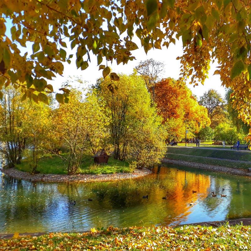 Gouden oktober stock afbeeldingen