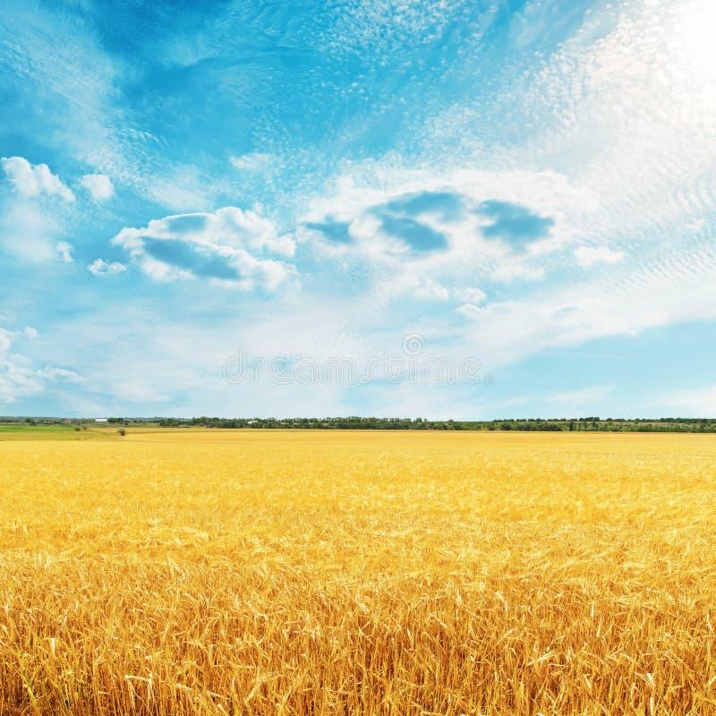 Gouden oogstgebied met tarwe en wolken royalty-vrije stock foto