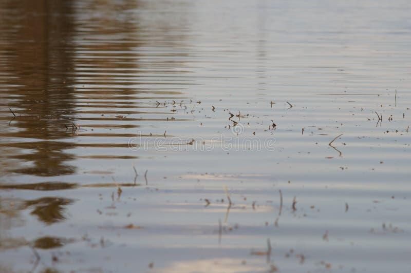 Gouden rimpelingen in water royalty-vrije stock foto