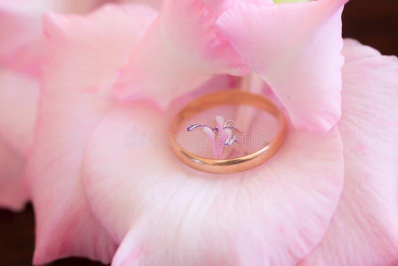 Gouden ring binnen tedere gladiolen stock fotografie