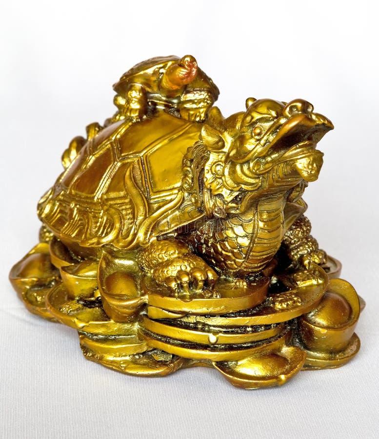 Gouden schildpadkant stock foto's