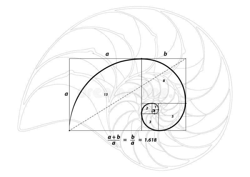 Gouden sectie en shell lijn op wit, vector royalty-vrije illustratie