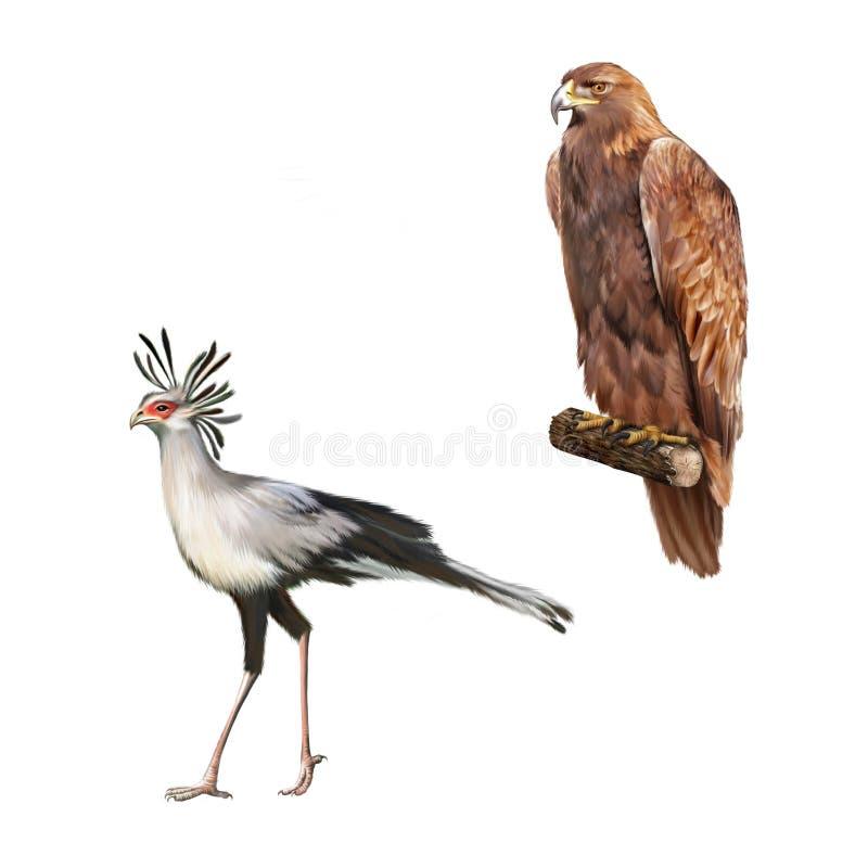 Gouden skalni van adelaarsorel, Secretarybird stock illustratie