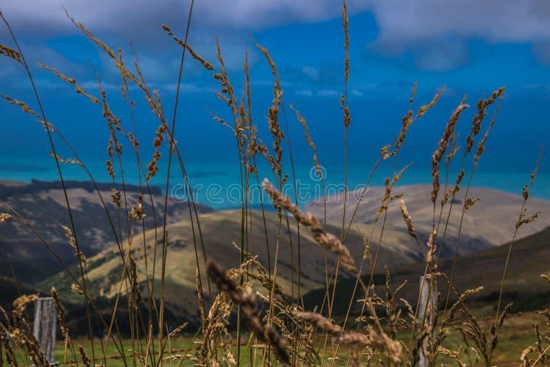 Gouden tarwe tegen bergen stock afbeeldingen