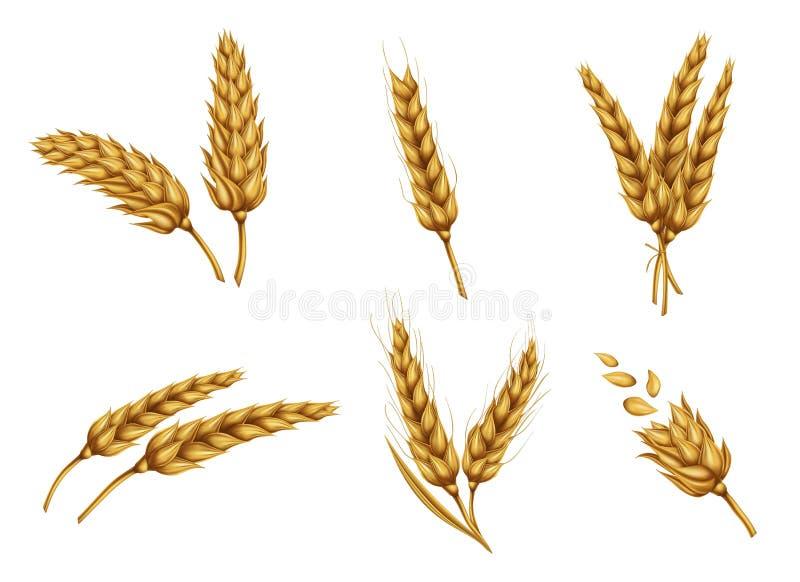 Gouden van tarweoren en korrels realistische vectorreeks stock illustratie