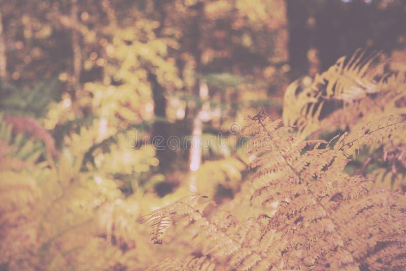 Gouden varenbladeren in een kleurrijke de herfst bosscène Uitstekend R royalty-vrije stock fotografie