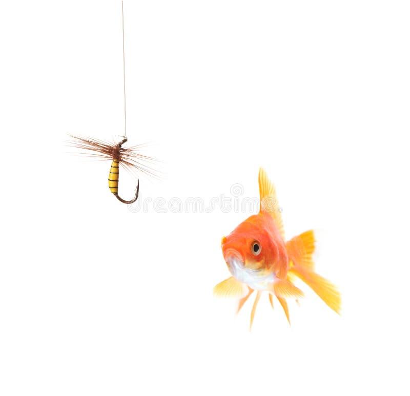 Gouden vissen en een visserijhaak stock fotografie
