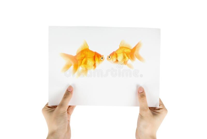 Gouden vissenfoto royalty-vrije stock afbeelding