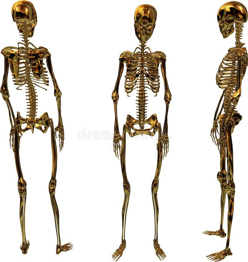 Gouden Vrouwelijke Skeletten stock illustratie